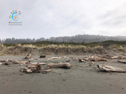 Finding driftwood to make art. #mosswoodconnections