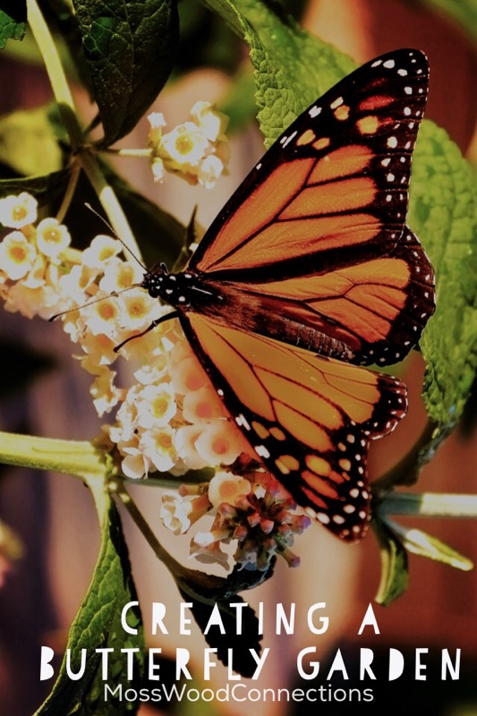 Creating a Butterfly Garden  #mosswoodconnections #science #butterfly #studyuniy #education #homeschool