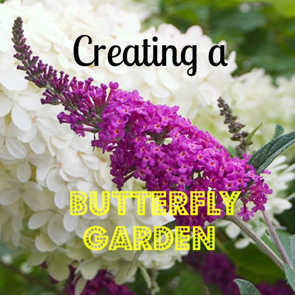 Creating a Butterfly Garden  #mosswoodconnections #science #butterfly #studyunit #education #homeschool