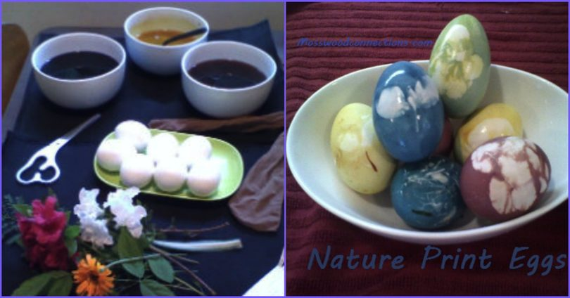Decorate Nature Print Eggs with Natural Food Dye #decoratingeggs #holidays #mosswoodconnections