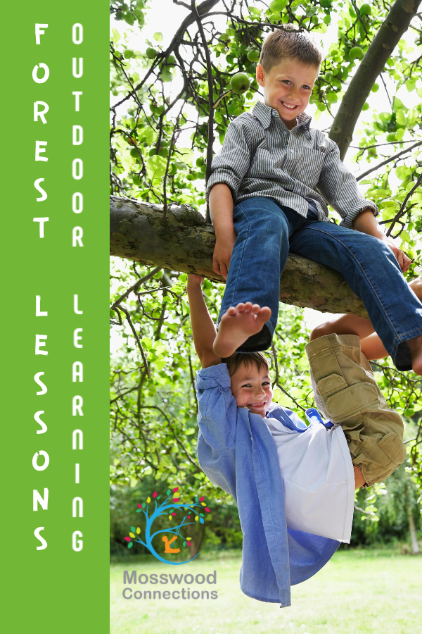 Forest Lessons_ Learning from Bird Nature Activities #mosswoodconnections #naturescience #forestschool #outdoorlearningactivities #educational #forestactivities